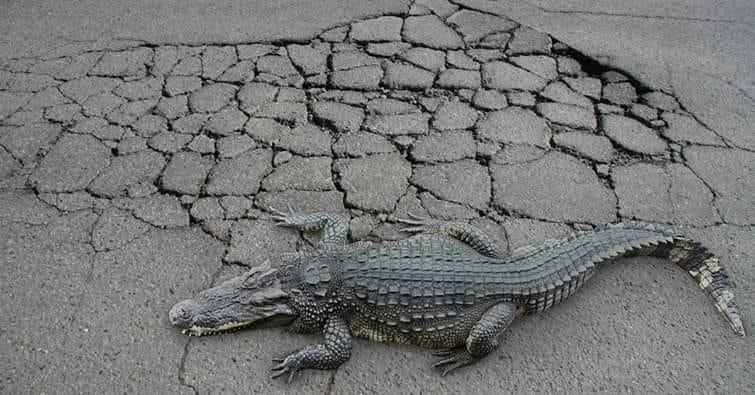Cracks in asphalt